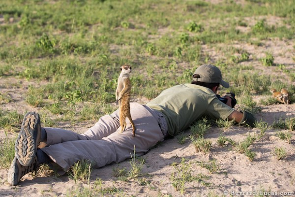 Meerkat on Leg