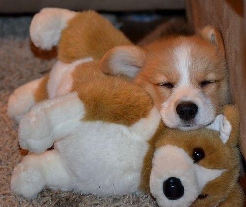 狗狗抱娃娃1