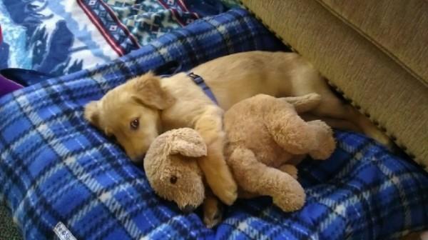 狗狗抱娃娃10
