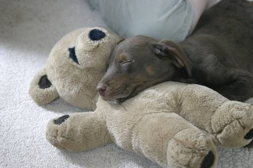 狗狗抱娃娃12