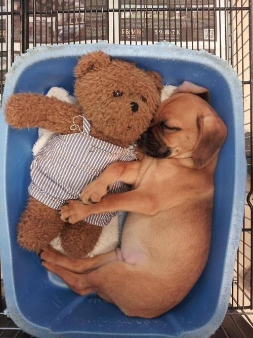 狗狗抱娃娃15
