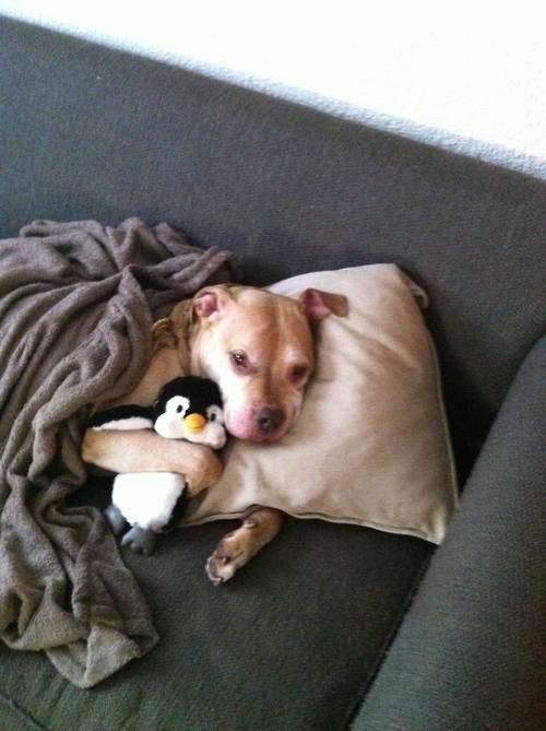 狗狗抱娃娃17