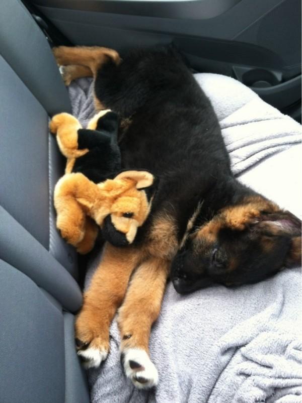 狗狗抱娃娃18