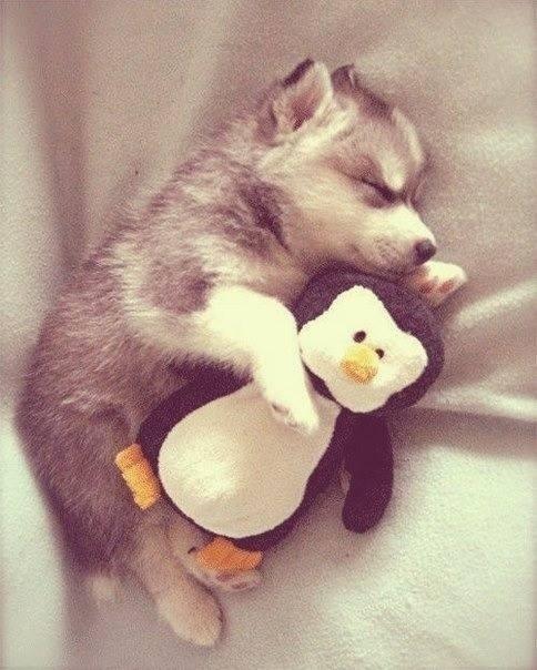 狗狗抱娃娃2