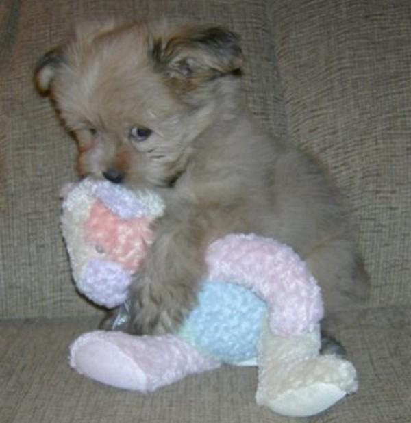 狗狗抱娃娃20