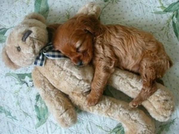 狗狗抱娃娃3