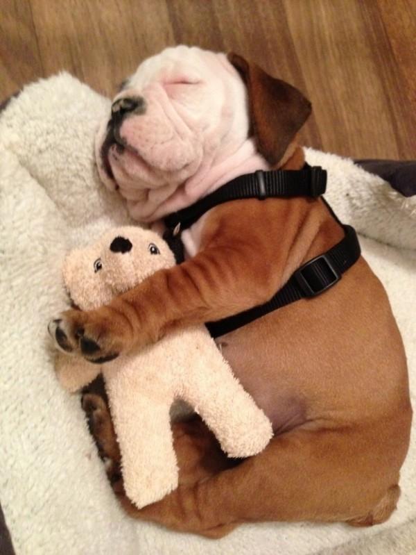 狗狗抱娃娃4