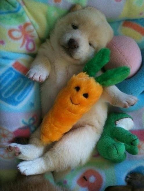 狗狗抱娃娃5