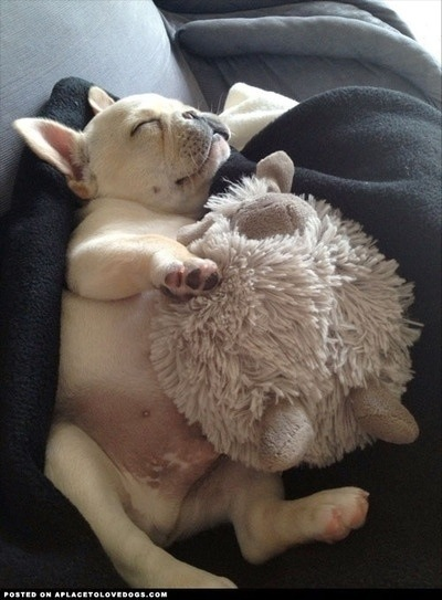 狗狗抱娃娃6