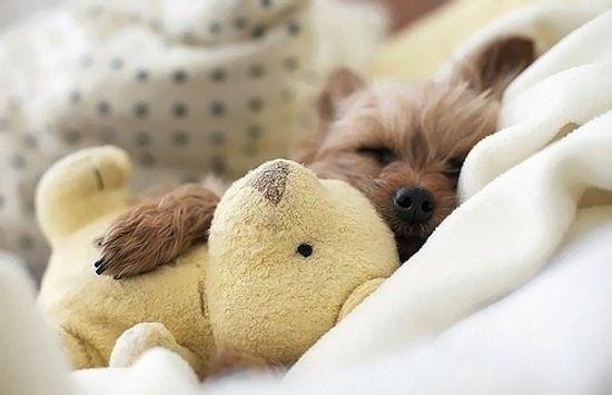 狗狗抱娃娃7