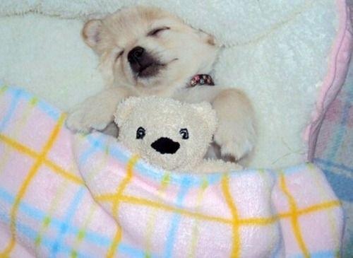 狗狗抱娃娃8