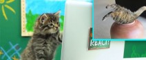 viral-cat