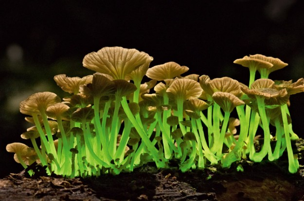 蘑菇012