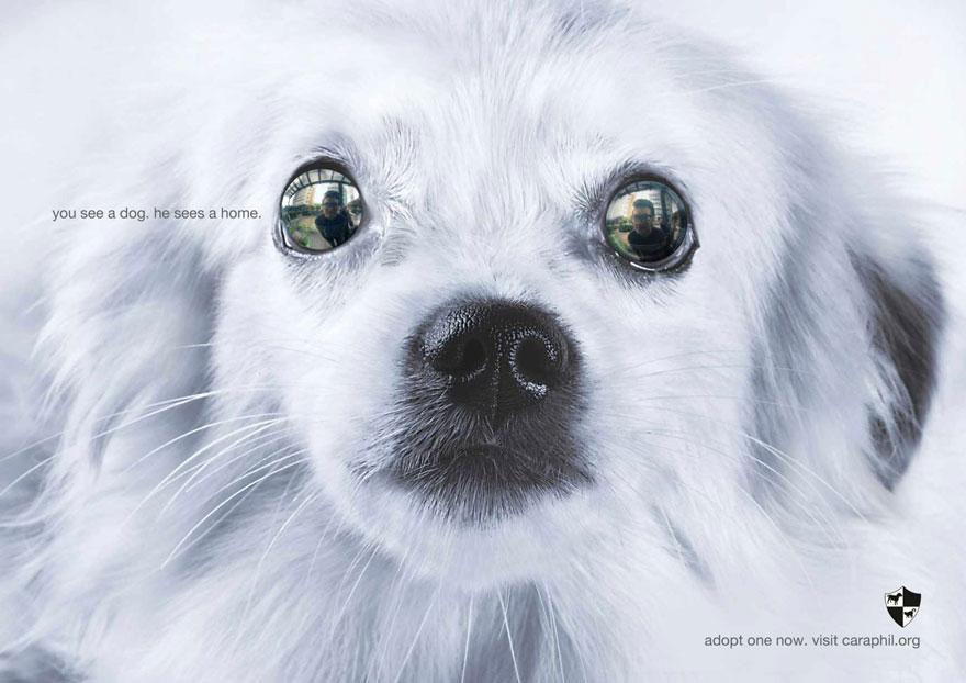 動物廣告161