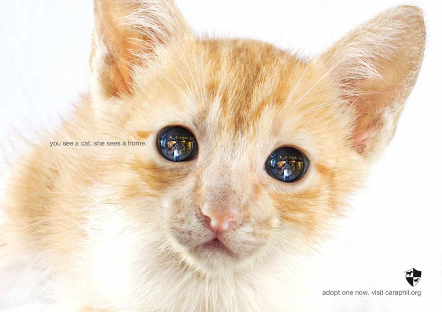 動物廣告162