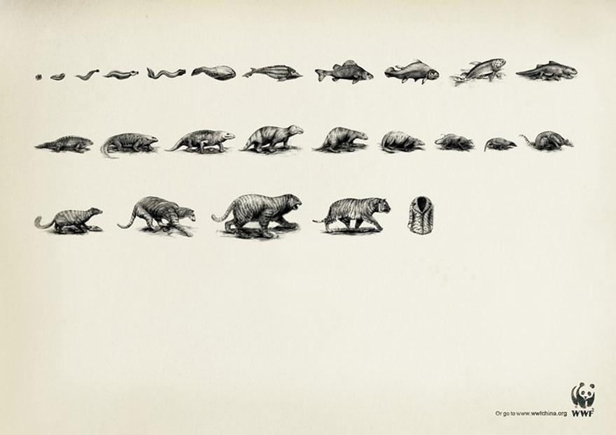 動物廣告172
