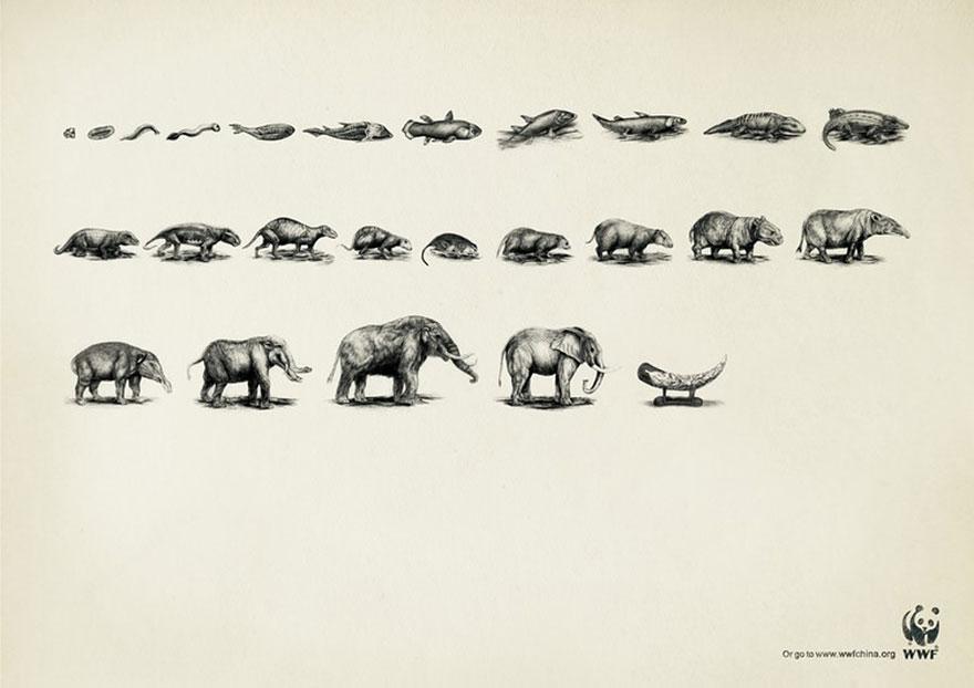 動物廣告173