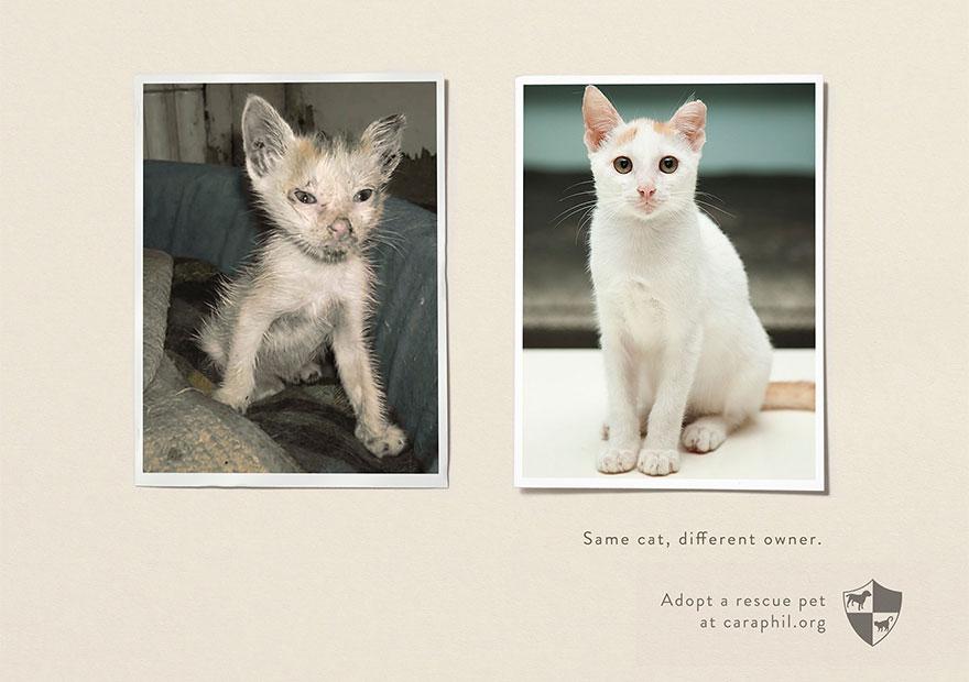 動物廣告201