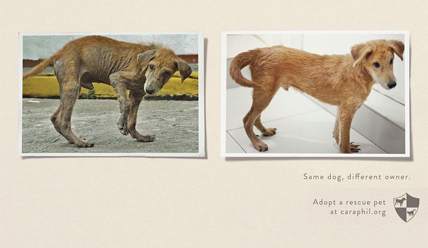 動物廣告202