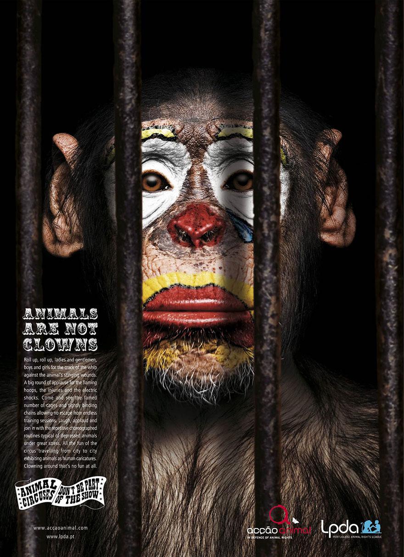 動物廣告21