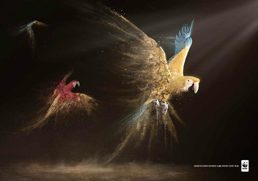 動物廣告211