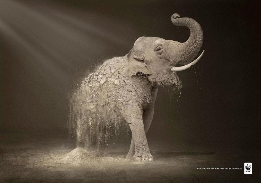 動物廣告212