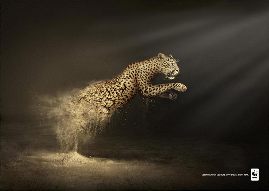 動物廣告213