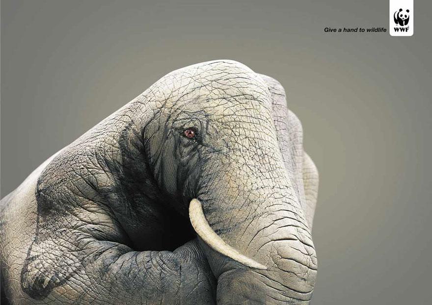 動物廣告231