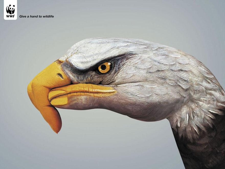 動物廣告232