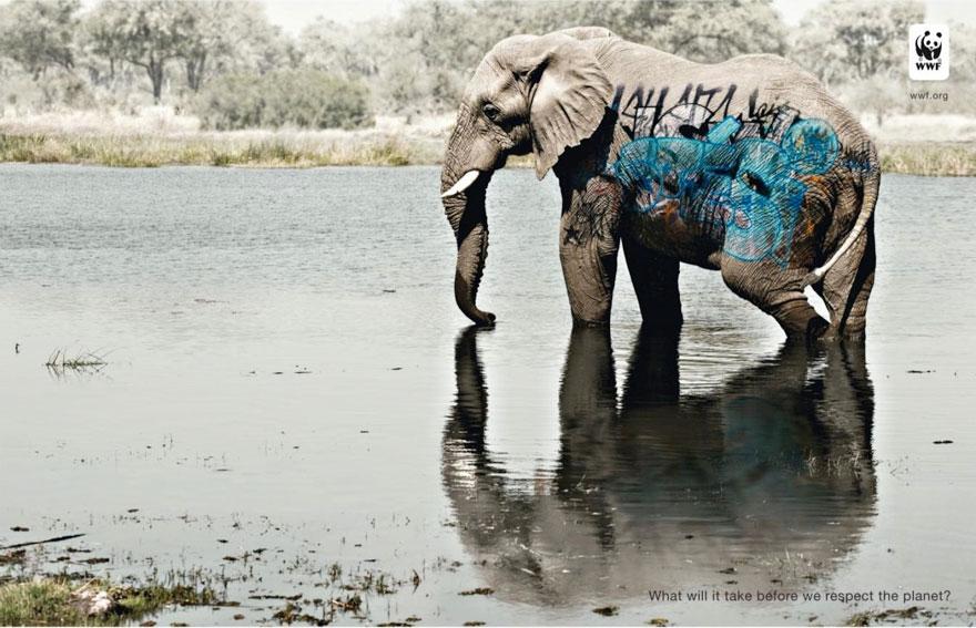 動物廣告251