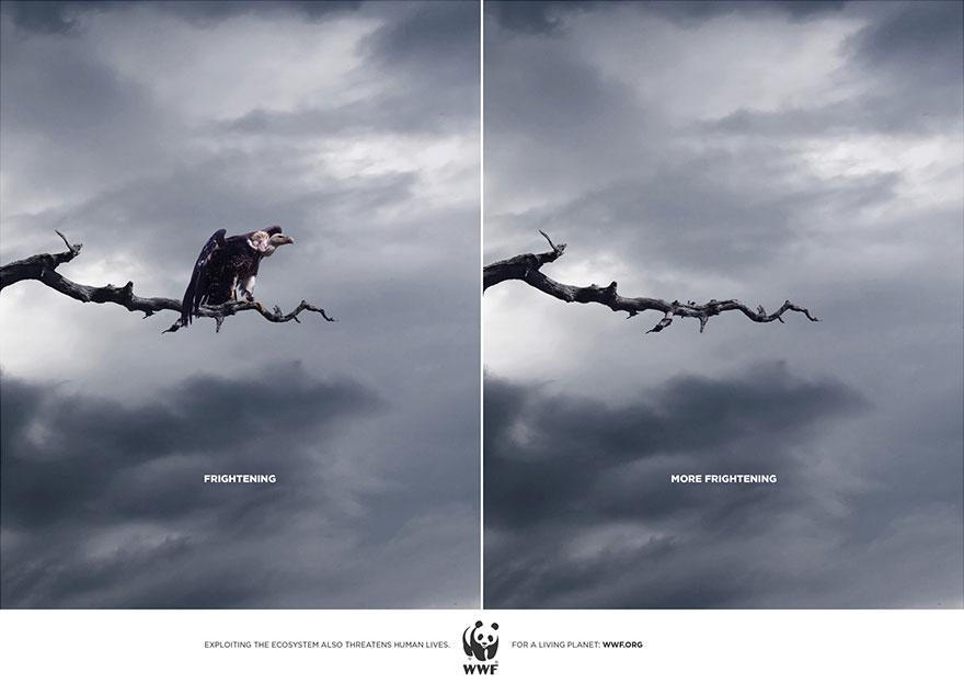 動物廣告52