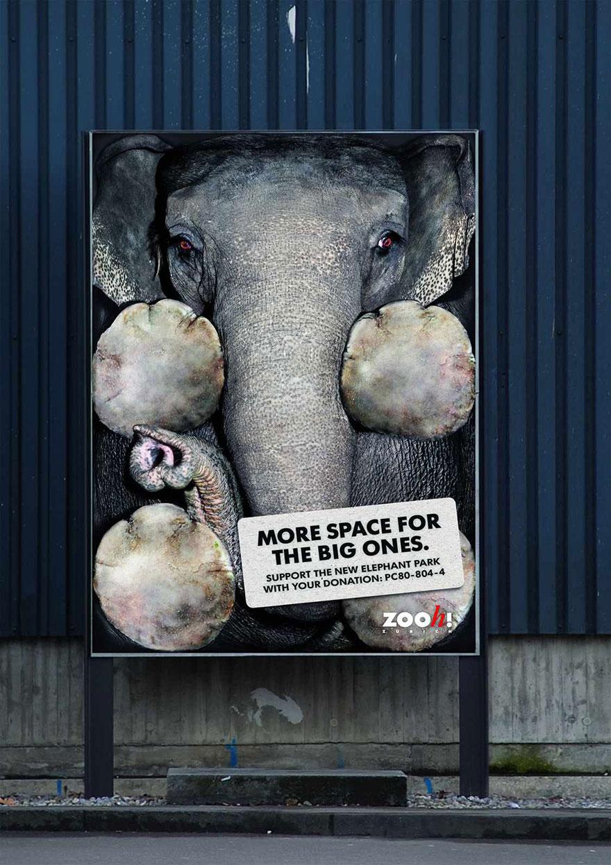動物廣告71