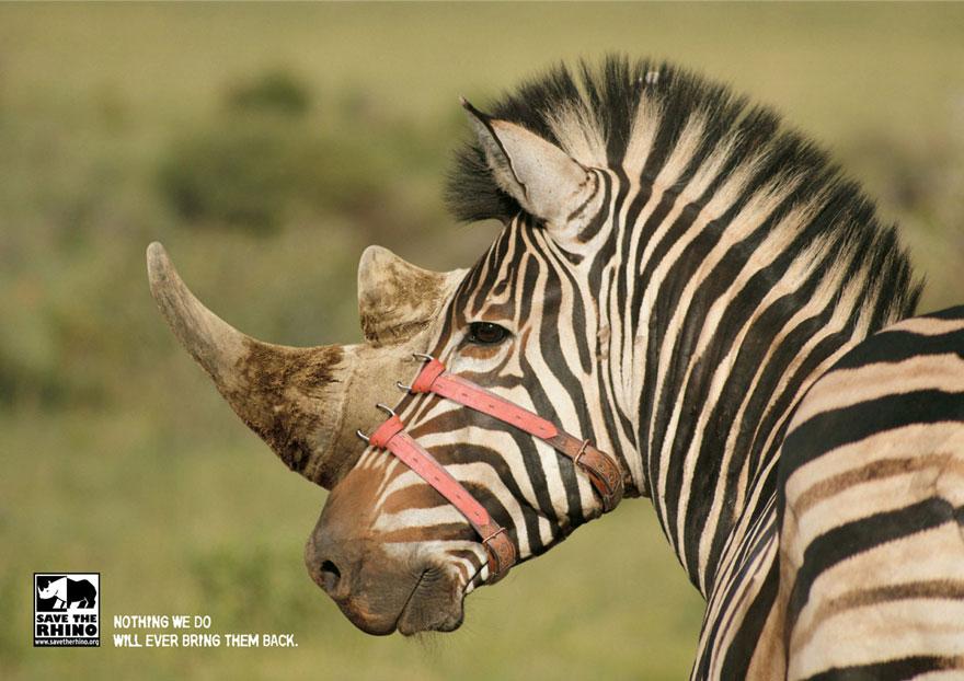動物廣告82