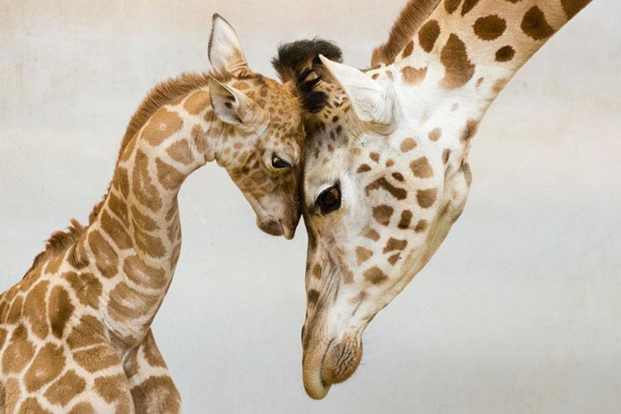 動物親情8