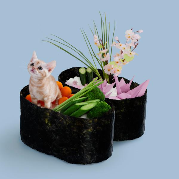 壽司貓10