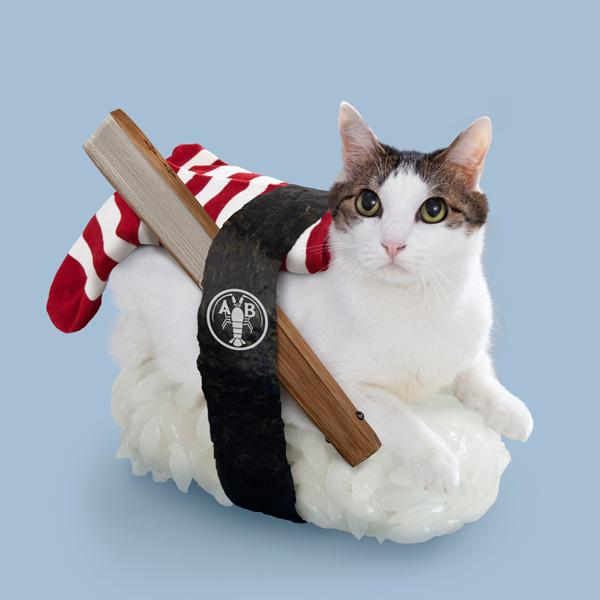 壽司貓11