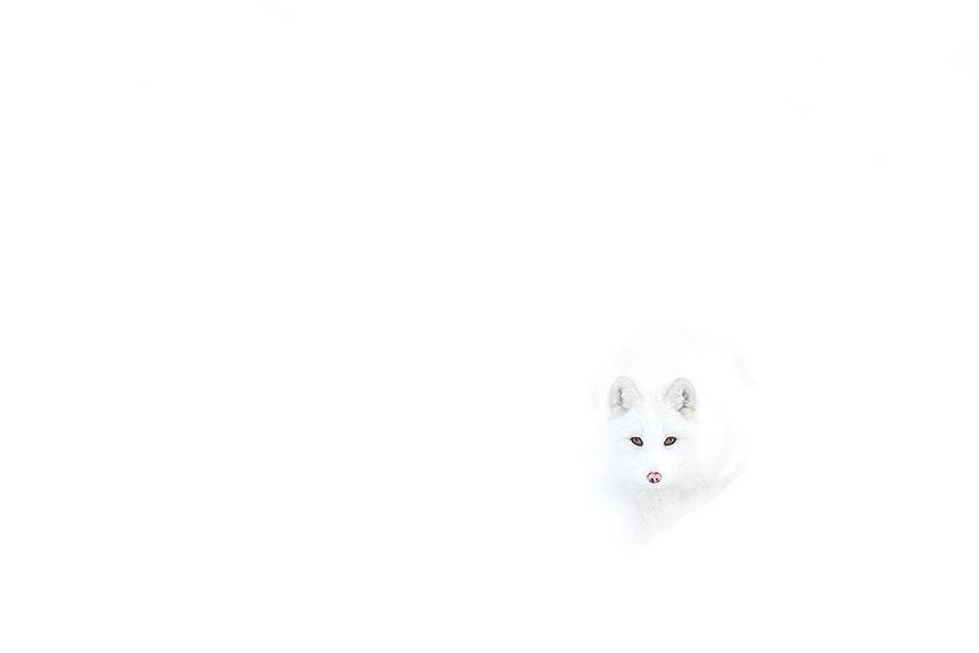 小狐狸10