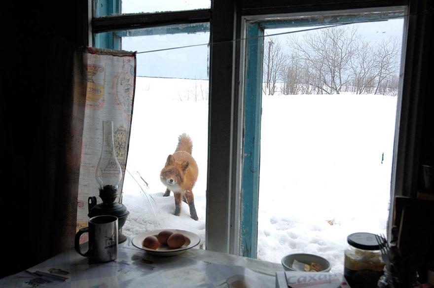 小狐狸13