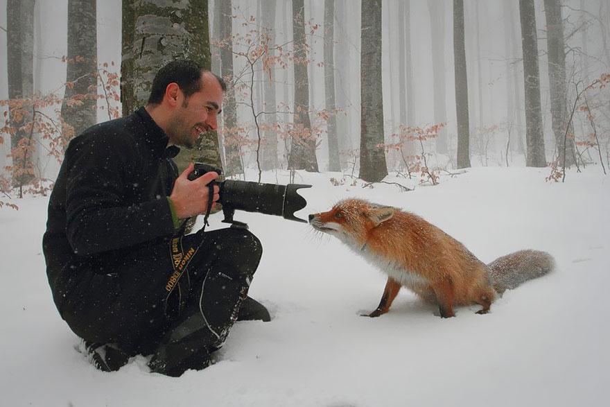 小狐狸16