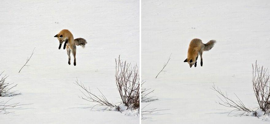 小狐狸19