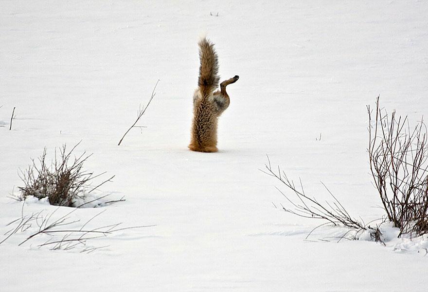 小狐狸20