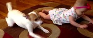 狗教嬰兒爬