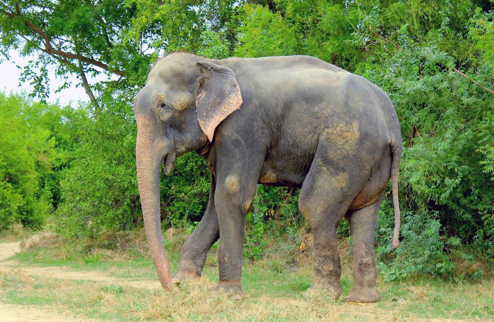 大象眼淚1