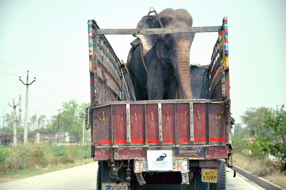 大象眼淚3
