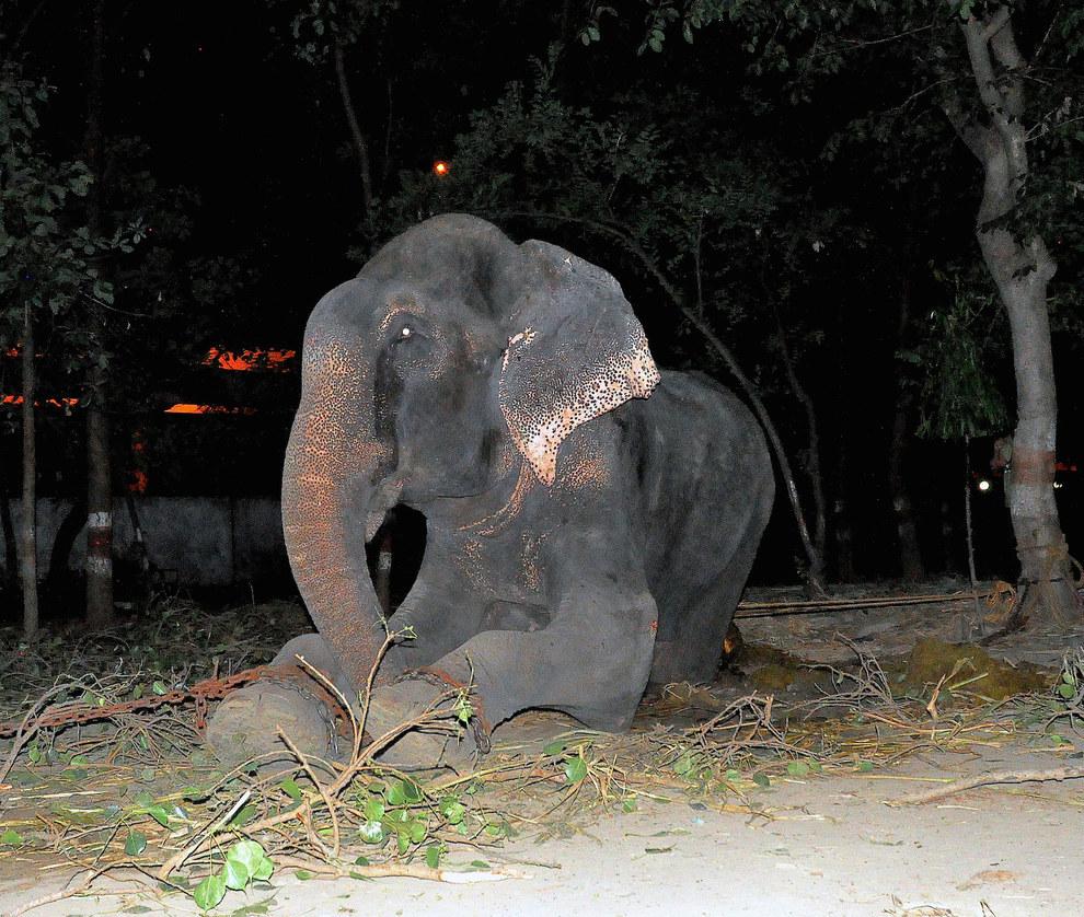 大象眼淚4