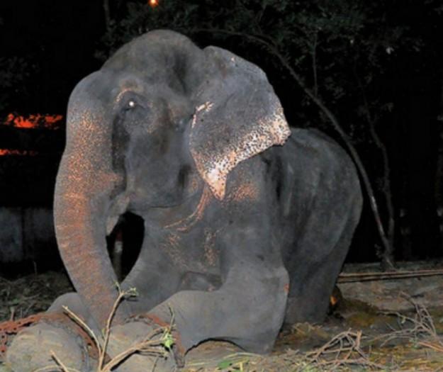 大象眼淚5