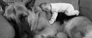 小孩與大狗