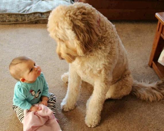 小孩與大狗3