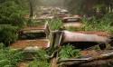 比利時森林