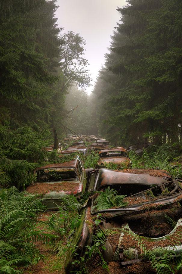 比利時森林1